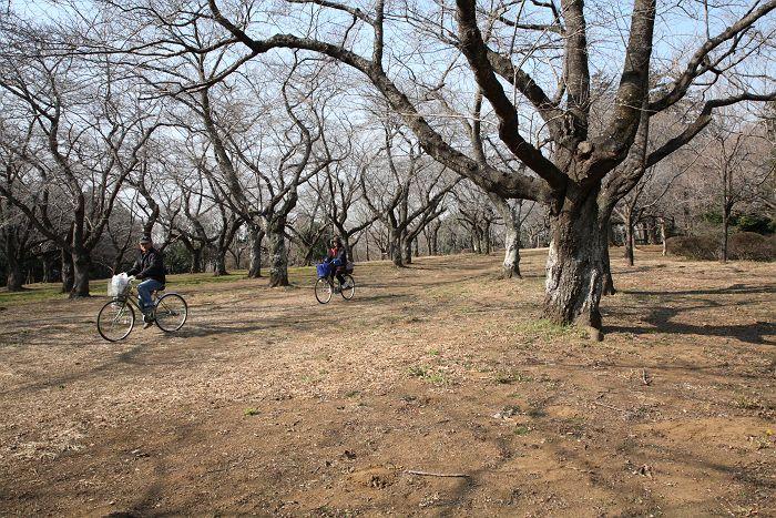 あけぼの山公園