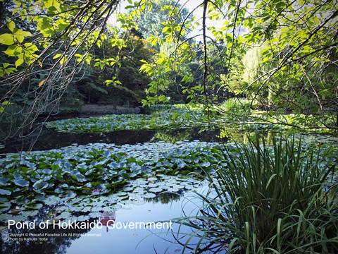 旧北海道庁舎の前の池