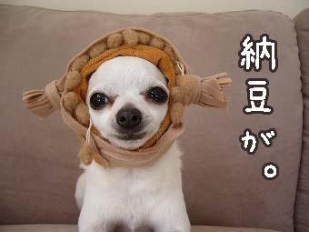 s-nattou copy