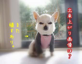 matayoko.jpg