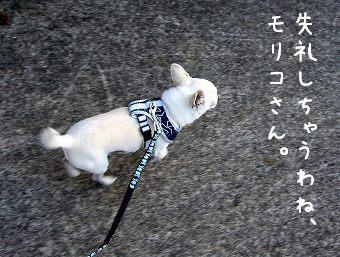 s-dogskip5.jpg