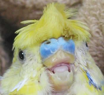 クチバシのない鳥の顔写真 - ス...