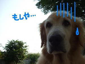 DSCF2620_convert_20090531202947zzz.jpg