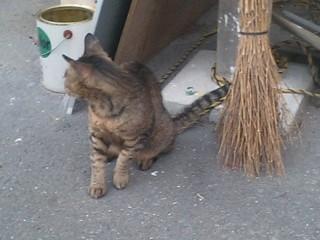 西部講堂猫①