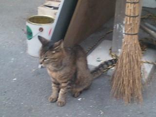 西部講堂猫②