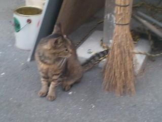 西部講堂猫③